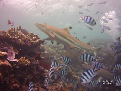Marine life off the coast of Fiji
