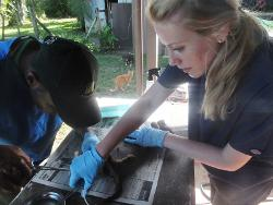 Veterinary project Fiji