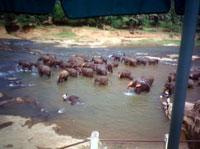 Elephant Orpanage