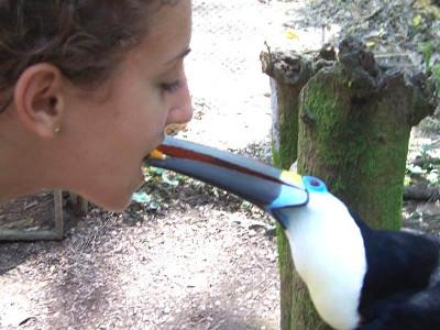Say hello to the tucan!