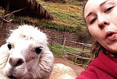 Cool Lamas in Peru