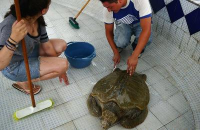 Turtle Conservation project