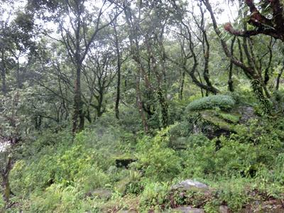 Dense vegetation at the Himalayan Mountain Conservation placement