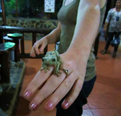 A volunteer in Costa Rica makes friends with the local wildlife