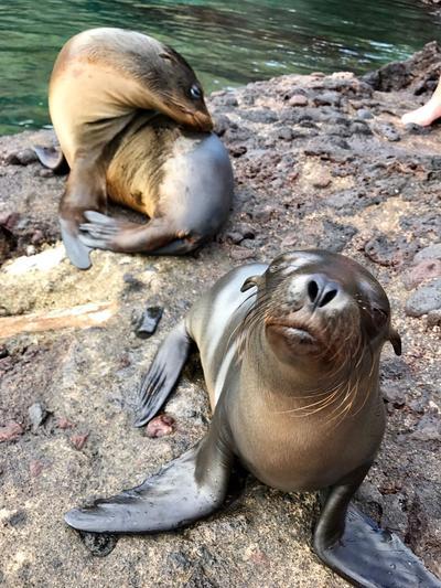 Sea lions in Ecuador