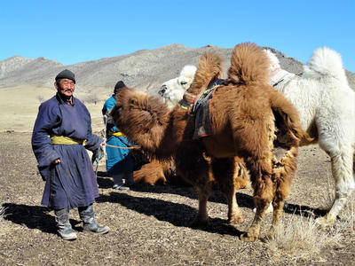 Nomads with camels in Mongolia