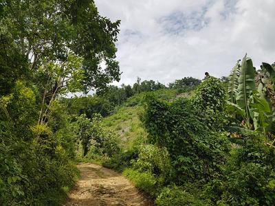 Lush vegetation in Jamaica