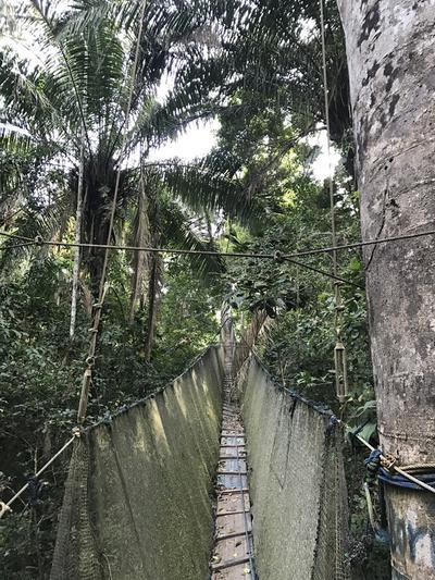 The canopy bridge in Taricaya Peru