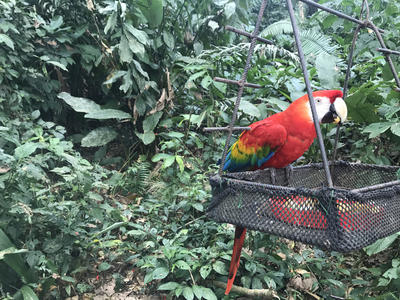The wildlife in Taricaya Peru