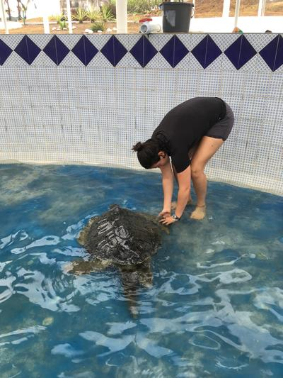 Cleaning the turtle enclosure