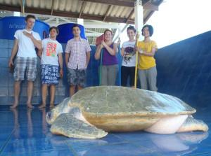 Volunteers at the turtle center