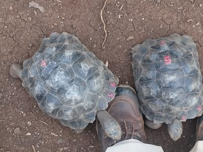 Tortoises at the Conservation Placement in Ecuador