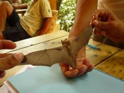Measuring the bats