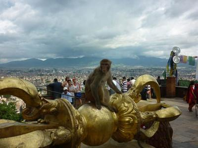Monkey and view over city
