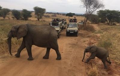 Elephant watching in Tarangire National Park