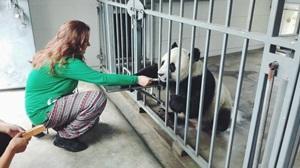 Voluntaria con Pandas en China