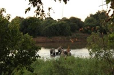Un coucher de soleil avec les éléphants lors d'une sortie
