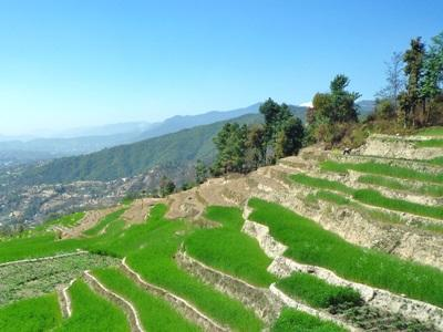 Rizieres du Nepal