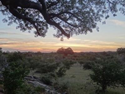 Paysage de bush africain