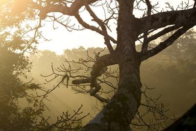 Coucher de soleil sur le forêt amazonienne