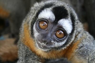 Réserve animalière Pérou
