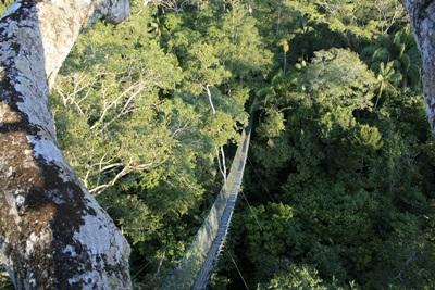 Vue de la canopée
