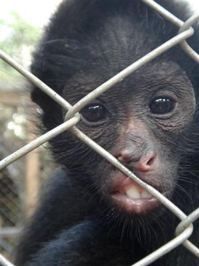 Aider des animaux sauvages en forêt amazonienne