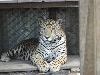 Jessica Kaulanjan - Peru - Conservation