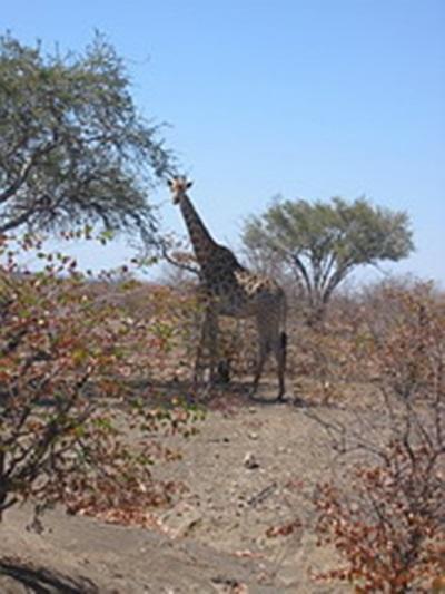 Laurane Winandy – Ecovolontariat en Afrique du Sud – 2008
