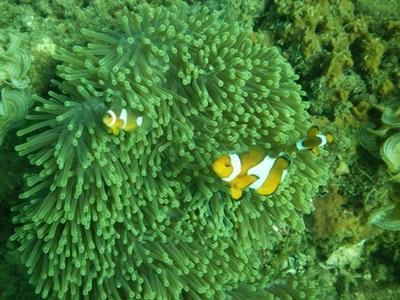 Action pour l'environnement sous-marin en Asie du Sud Est