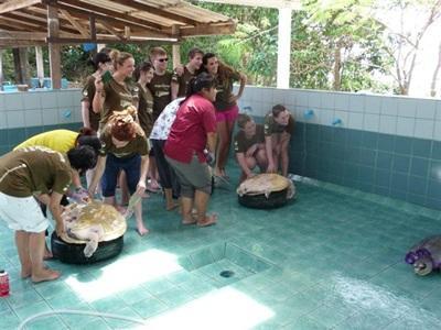 S'occuper des tortues en Thaïlande