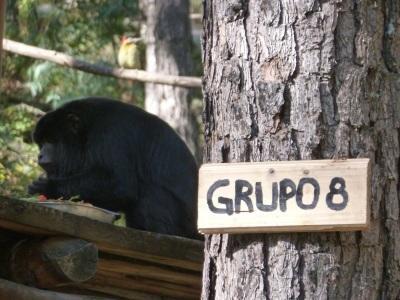 Groupe de singes dans le centre de réhabilitation