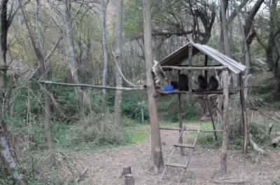 Mission Soins animaliers en Argentine  réhabilitation des primates