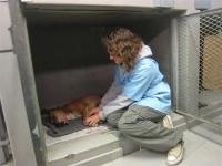 S'occuper d'animaux abandonnés au Cap
