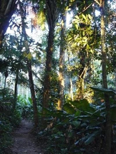Ecovolontariat en forêt amazonienne