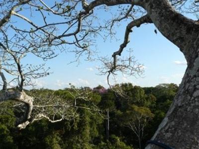 Vue de la canopée au Pérou