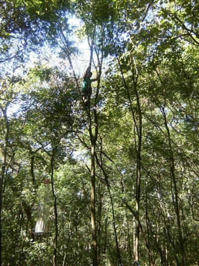 Etude de biodiversité de flore costaricaine