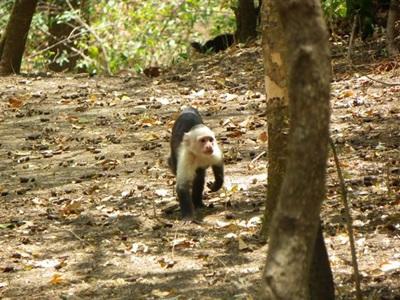 Habitant du parc national au Costa Rica