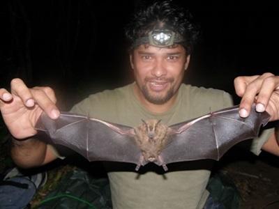 Projet Chauve-souris au Costa Rica