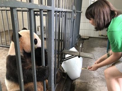 高校生スペシャルボランティアとして行った大好きなパンダのケア活動