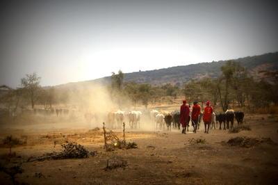 Vista de un paisaje con campesinos y su ganado en tanzania