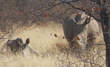 Natuurbehoudproject in Zuid-Afrika - Fiona Korthals Altes