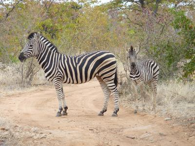 Natuurbehoud & Milieu project in Zuid-Afrika - Joris Remmery