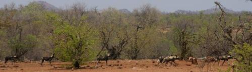 Natuurbehoudproject in Zuid-Afrika door Matthijs Bennemeer
