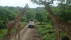 Genieten van de mooie natuur in Tanzania