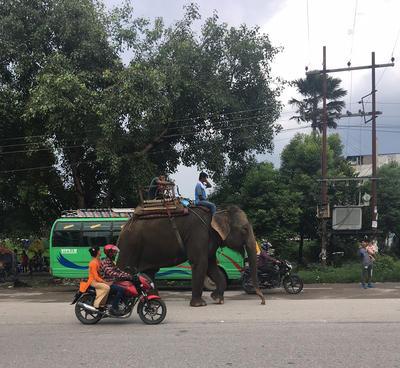 Słoń idący miejską drogą